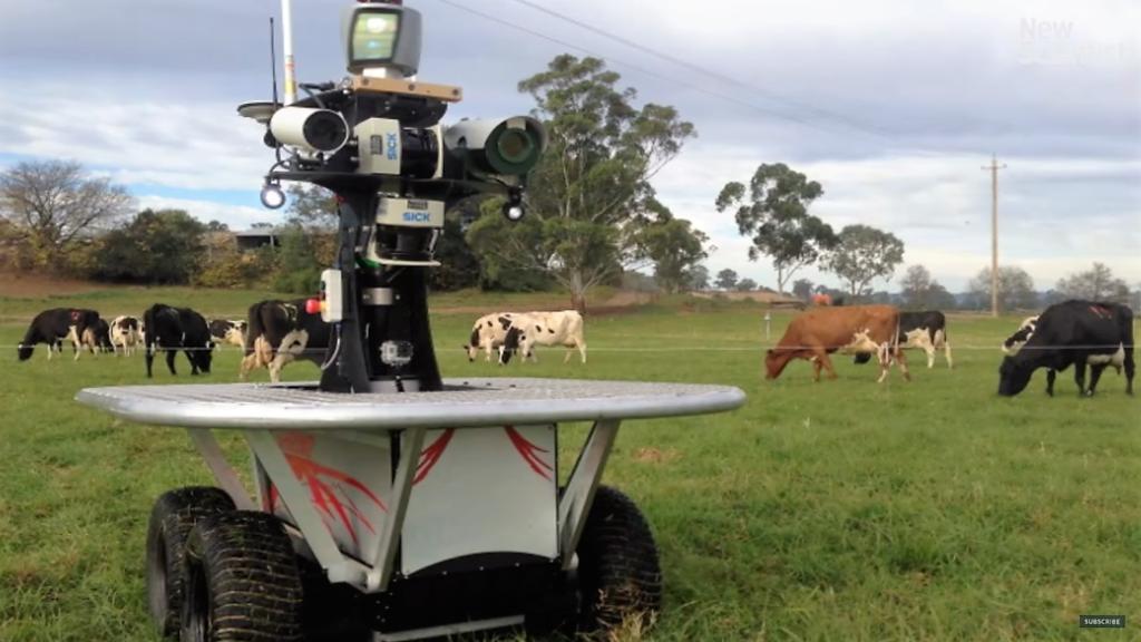 Un robot berger bientôt dans les prés !
