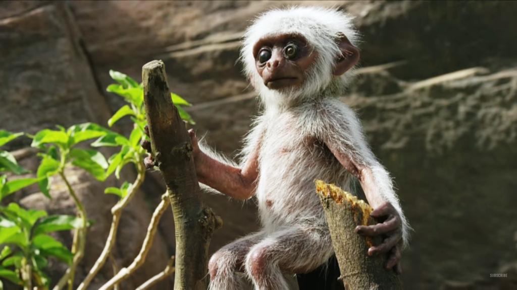 Des animatroniques au coeur de la faune pour étudier les émotions des animaux