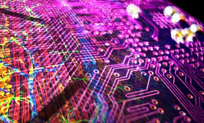 Des bio-calculateurs sur-mesure pour résoudre des problèmes précis