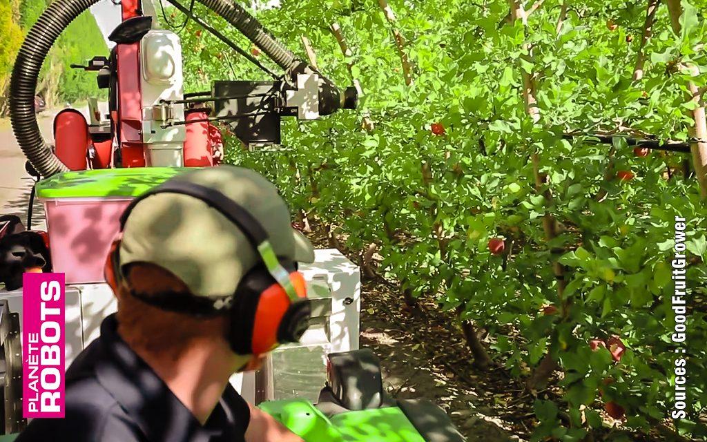 Une façon originale de ramasser des pommes