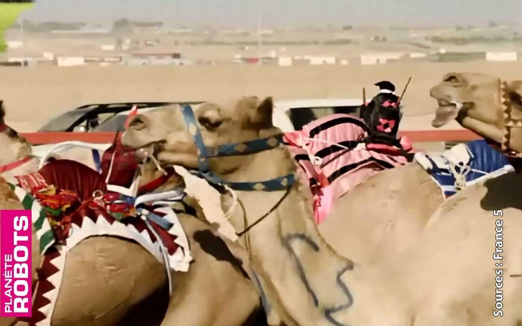 À Abu Dhabi, pilotez un dromadaire avec un robot