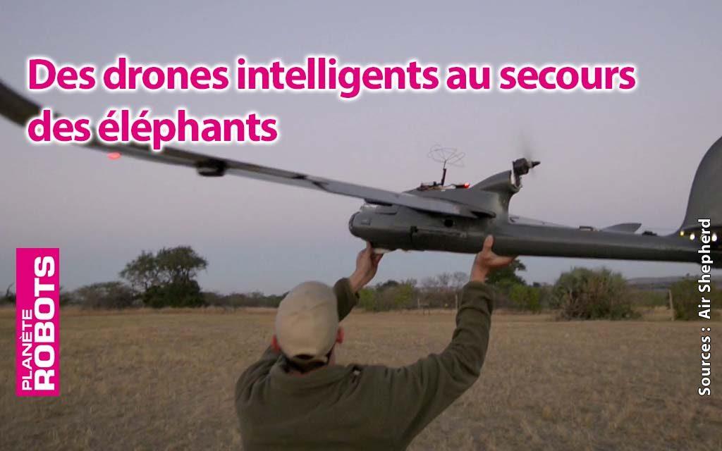 Des drones pour sauver les éléphants !