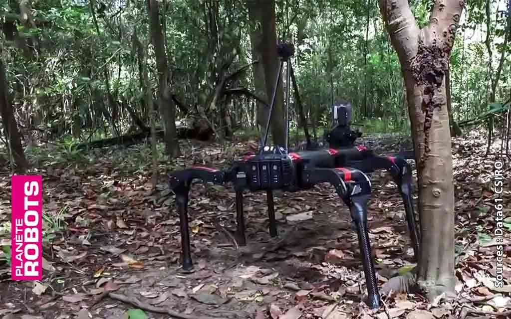 Des robots en Amazonie pour protéger plus vite la biodiversité