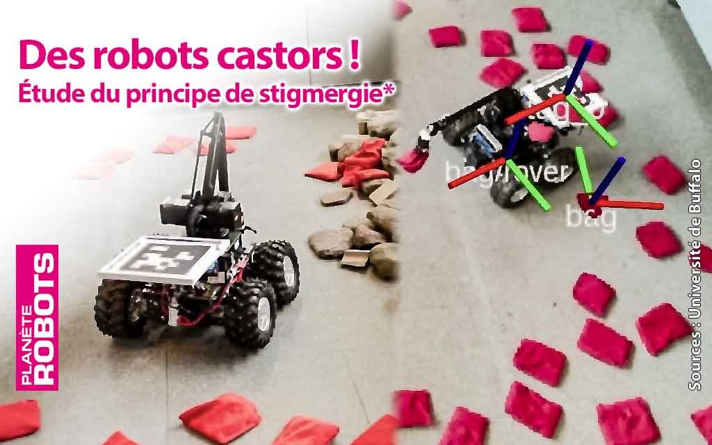 Le principe de stigmergie appliqué à des robots castor