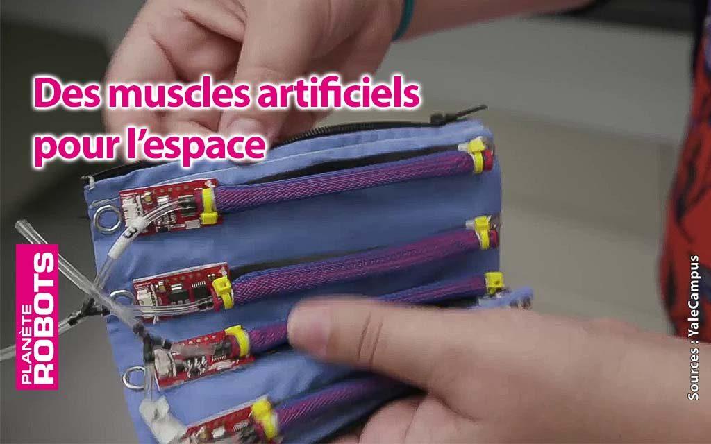 Des muscles poids plume pour l'espace