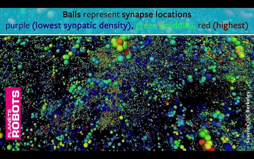 Localisation et classification des synapses