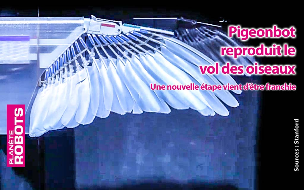 PigeonBot imite le vol des oiseaux avec des ailes à voilure variable