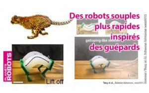 Inspirés de la souplesse de la colonne vertébrale des guépards, ces robots souples sont plus rapides