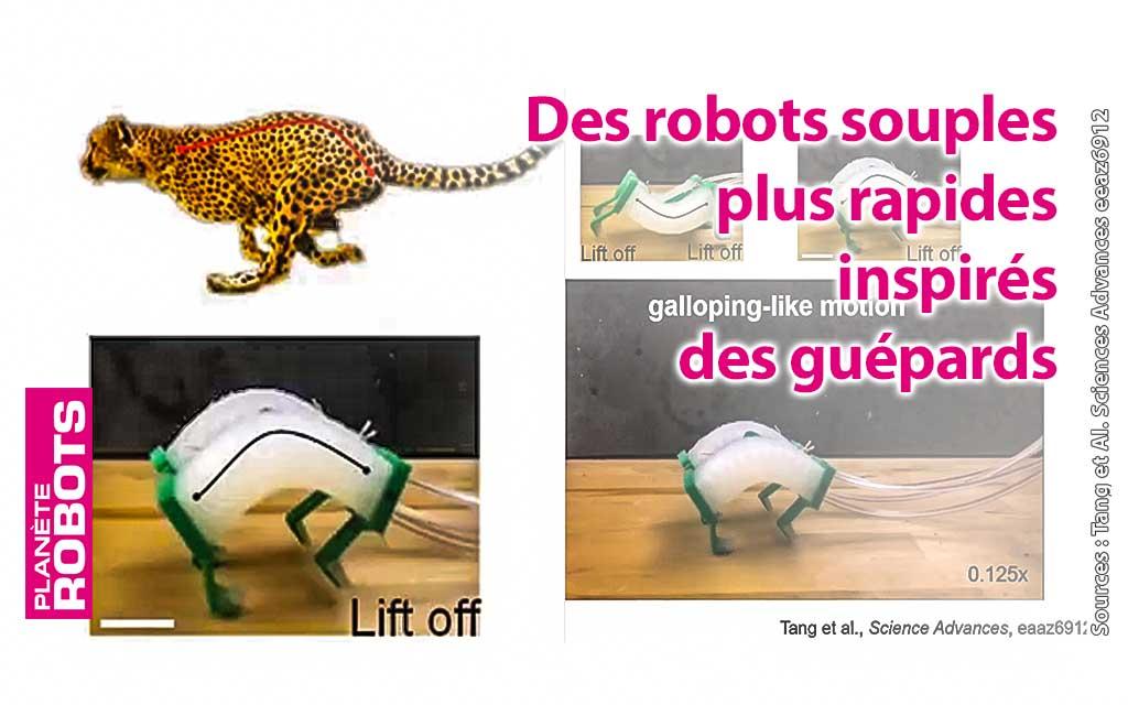Des robots souples rapides inspirés des guépards