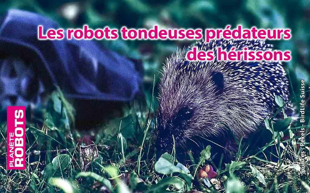 Les robots tondeuses, nouveaux prédateurs des hérissons