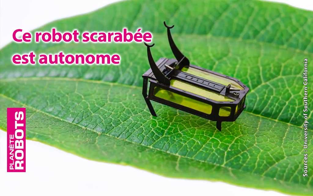 RoBeetle est un robot scarabée totalement autonome en énergie
