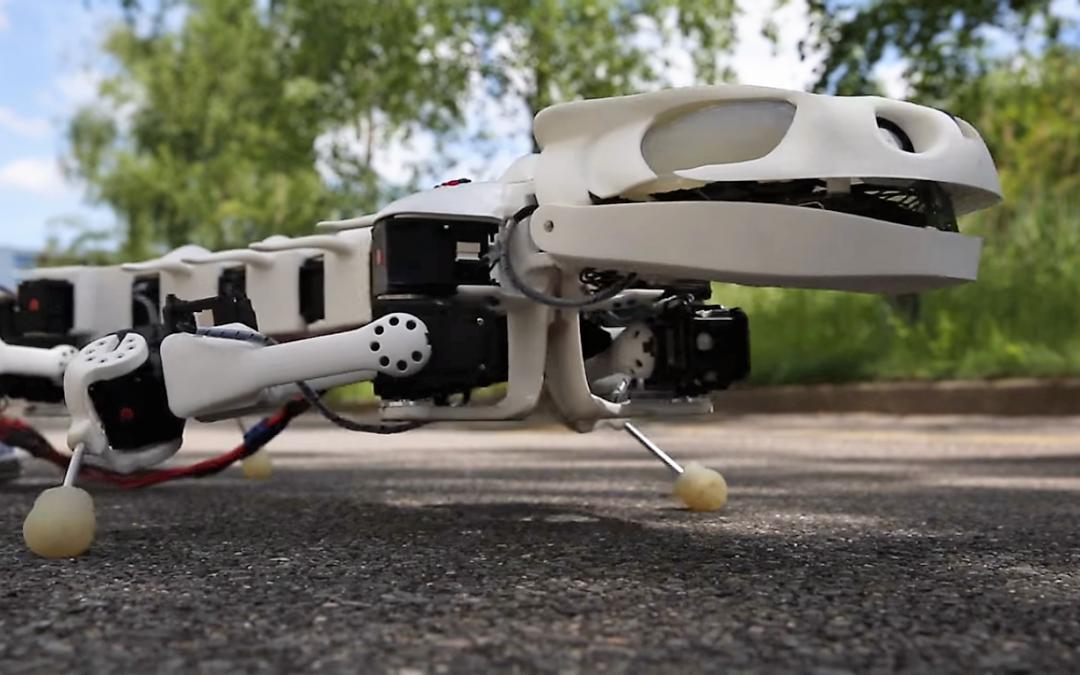 Pleurobot, un robot salamandre permet d'étudier l'évolution de la marche