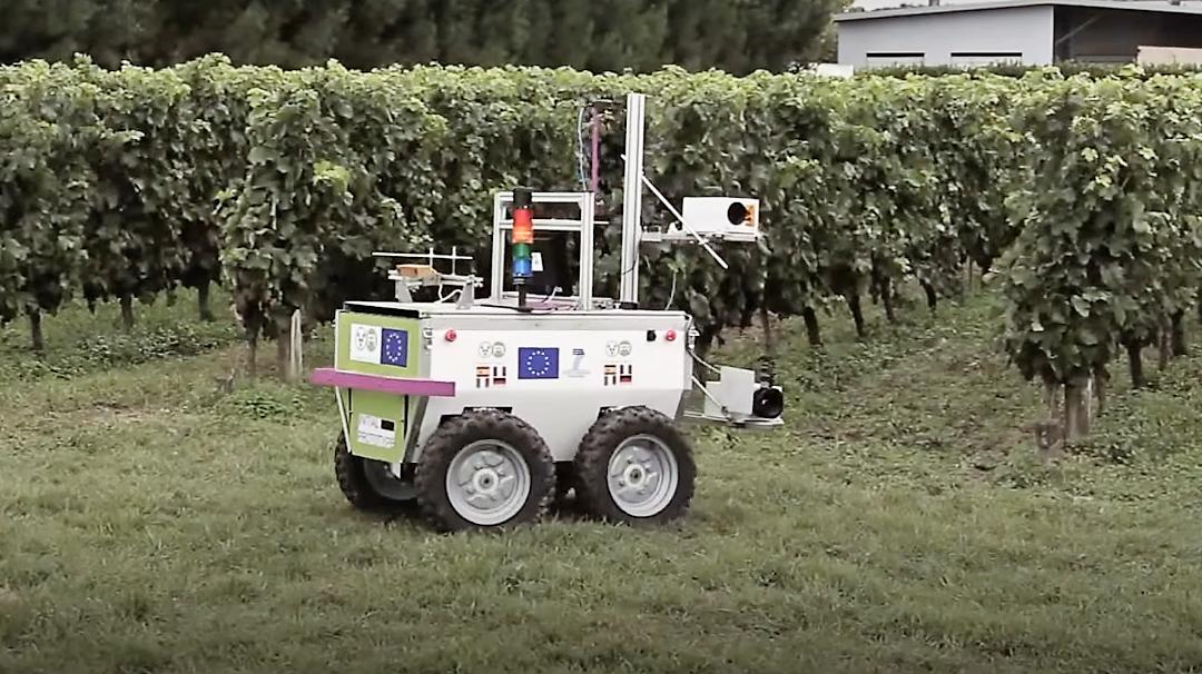 VineRobot contrôle les vignes pour une meilleure qualité