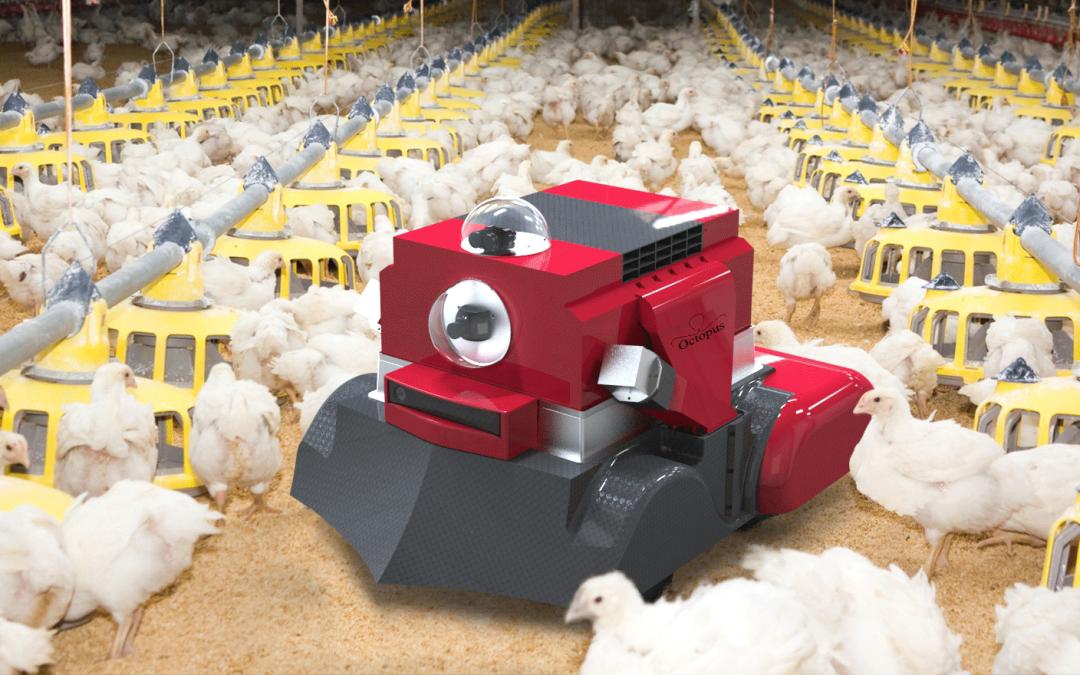 Un robot pour les poulaillers industriels