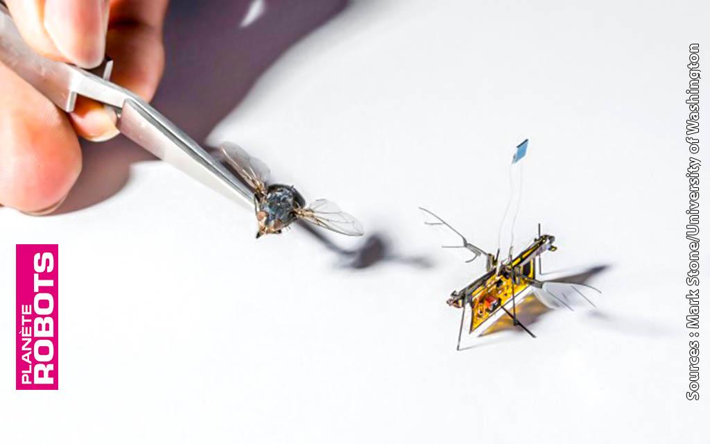 Des robots en essaim alimentés à distance