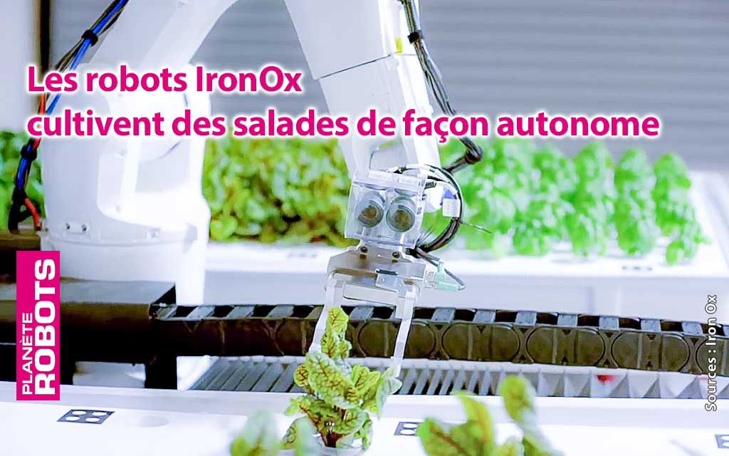 Des salades entretenues par des robots