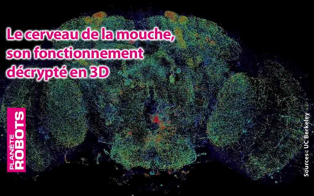 Les débuts de la reproduction du fonctionnement du cerveau ?
