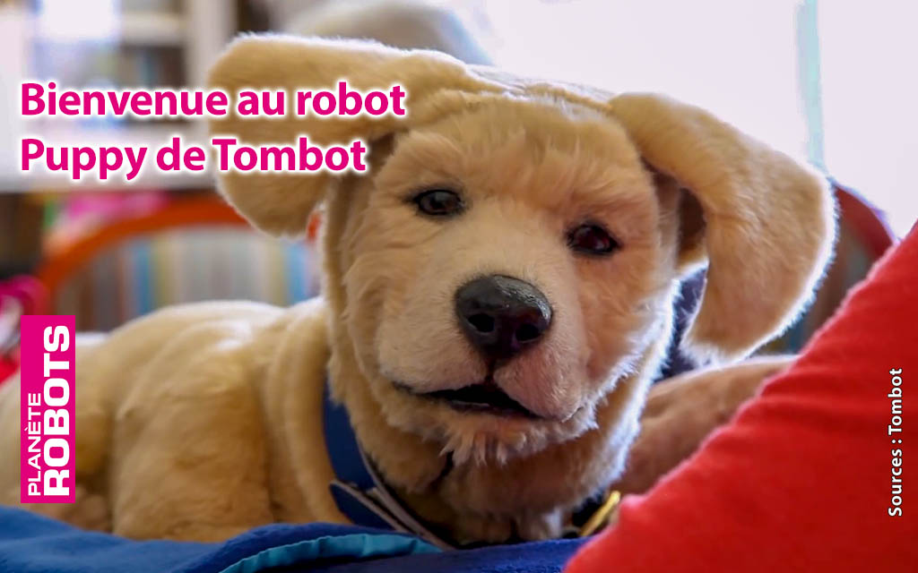 Tombot Puppy, le chien robot qui ne vous mordra jamais